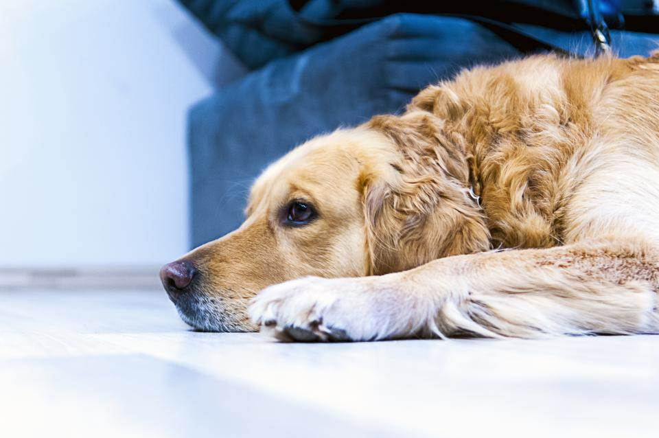 אפשר לבדוק גם בבית. כלב צילום: stocksnap.io