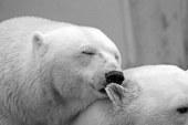 """בגליל יוקם """"בית חולים לדובים"""""""